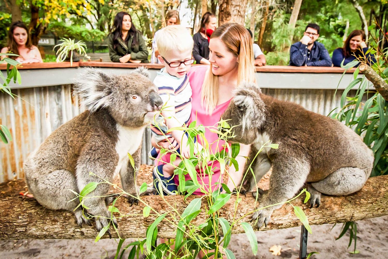 Perth Water Park, Maze & Koala Experience