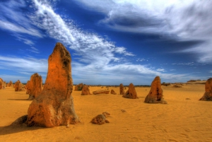 Pinnacles, Koalas & Sandboarding Tour Day Trip from Perth