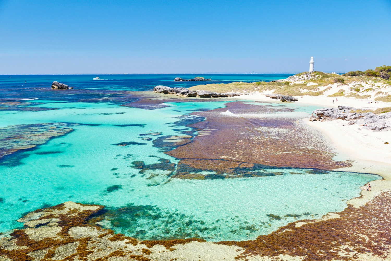 Rottnest Grand Island Package- Ferry, Tour & Light Lunch