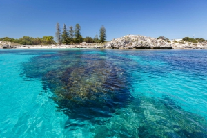 Rottnest Island Day Trip by Ferry & Adventure Boat Tour