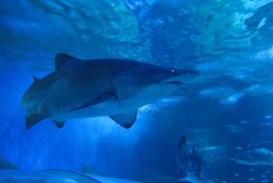 Snorkel with Sharks at AQWA