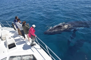 Whale Watching Cruise from Busselton, Augusta or Dunsborough