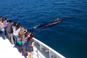 Whale Watching Cruise from Hillarys Boat Harbor