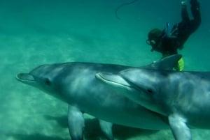 Wild Dolphin Swim & Cruise Day Trip from Perth