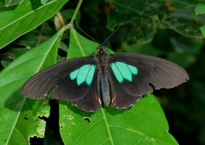 Butterfly spotting