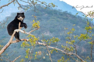 Chaparri Private Conservation Area
