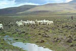 From Arequipa: 3-Day Trekking Tour to Colca Canyon