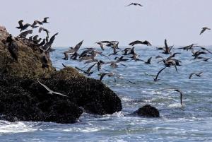 From Paracas: Ballestas Island Boat Tour
