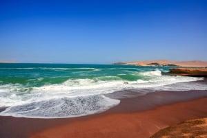 From Paracas: Paracas National Reserve Private Tour