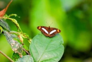 Iquitos: 6-Hour Amazon River Tour w/ Belén & Butterfly Farm