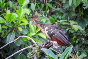 Iquitos: Amazon River Full Day Guided Tour