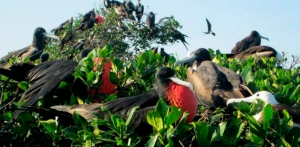 Mangroves of Tumbes National Sanctuary