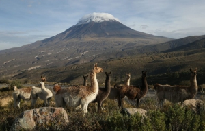 Salinas and Aguada Blanca National Reserve