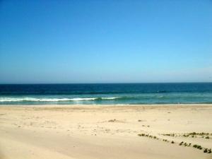 The organs Beach