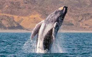 Whale watching - Inti Raymi