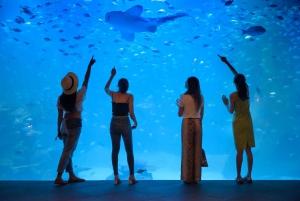 Aquaria Phuket & Trick Eye Museum Tickets