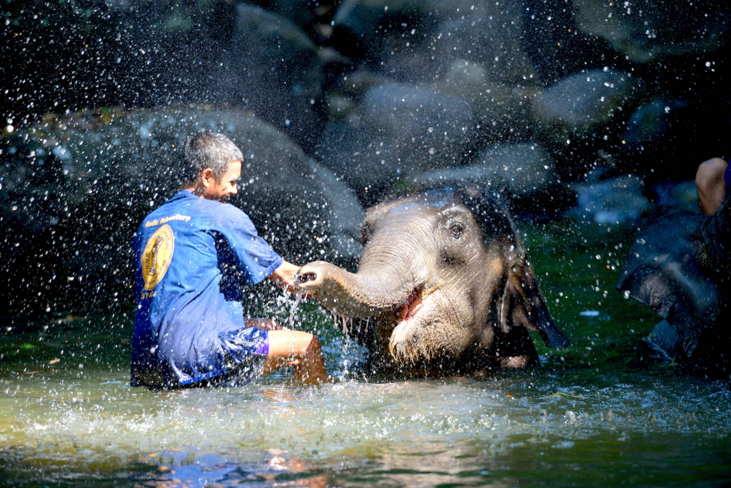 Full-Day Ethical Elephant Care Tour from Phuket & Phang Nga