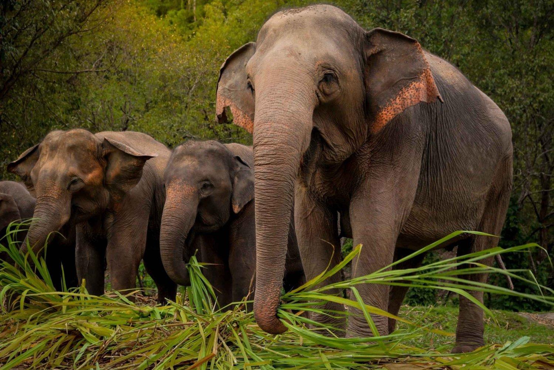Half-Day Ethical Elephant Jungle Sanctuary