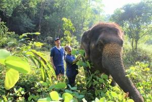 Phuket and Khao Lak: Ethical Elephant Park Tour