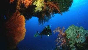 Sea Bees Diving Pak Meng