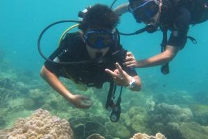 Scuba Diving for PADI Divers or Beginners