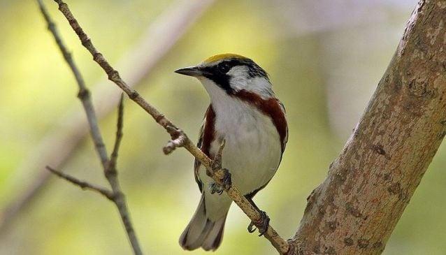 Birding Puerto Rico