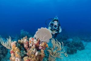 Fajardo: 2-Tank Reef Dive Excursion for Certified Divers