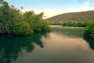 From San Juan or Ponce: Bioluminescent Bay Boat Tour