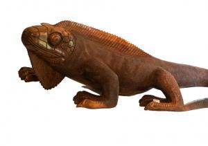 Haitian Gallery Iguana