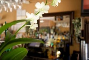 Orchids at La Parrilla Bar