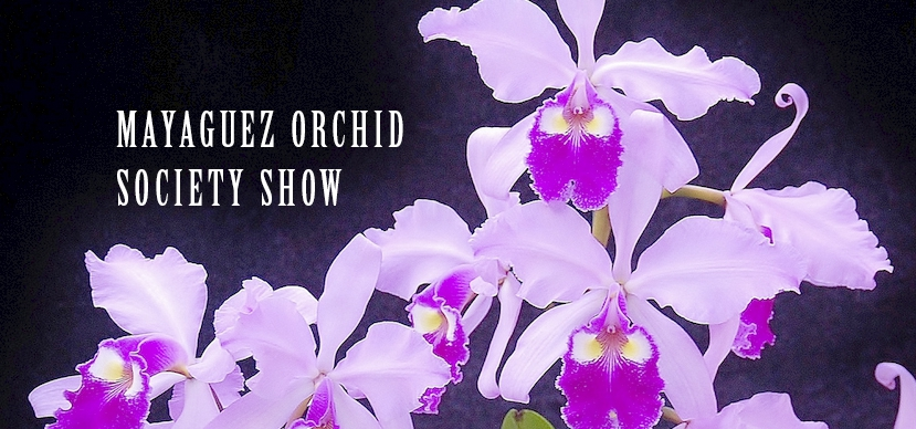 Mayagüez Orchid Society Show