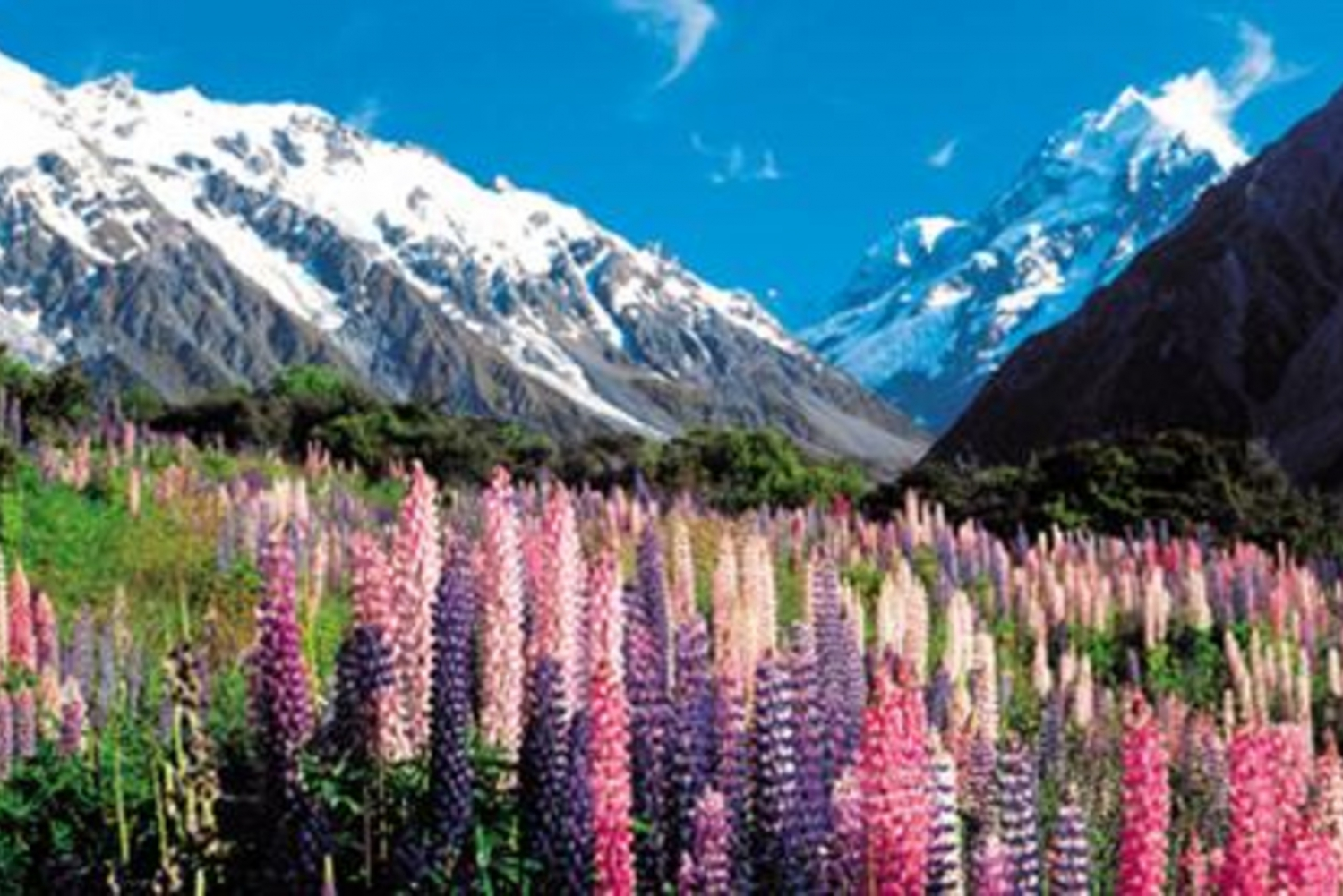 Christchurch to Queenstown Full-Day South Island Tour