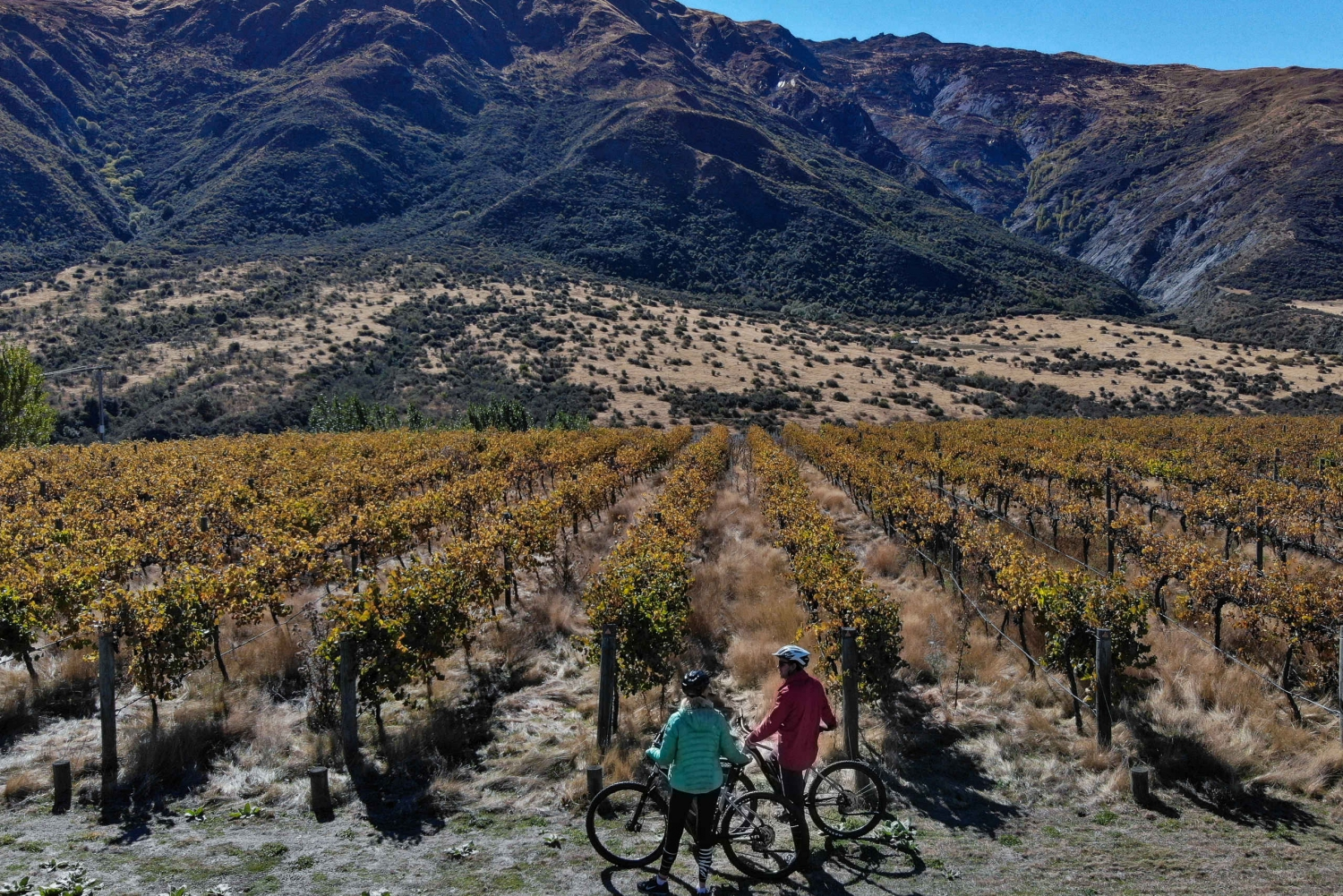 Self-Guided Wineries Bike Tour