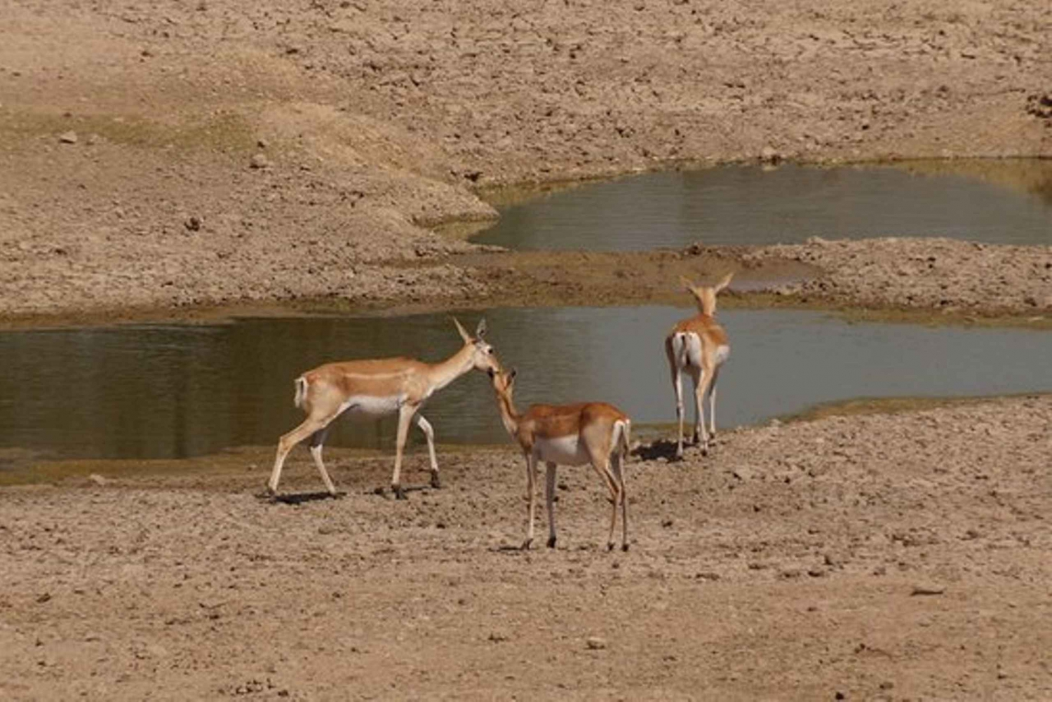 Bishnoi Village Safari Private Half Day Tour
