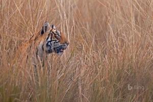 From Delhi: 4-Day Golden Triangle & Ranthambore Tiger Safari