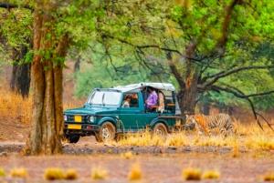 From Jaipur: Ranthambore Tiger Safari Overnight Tour
