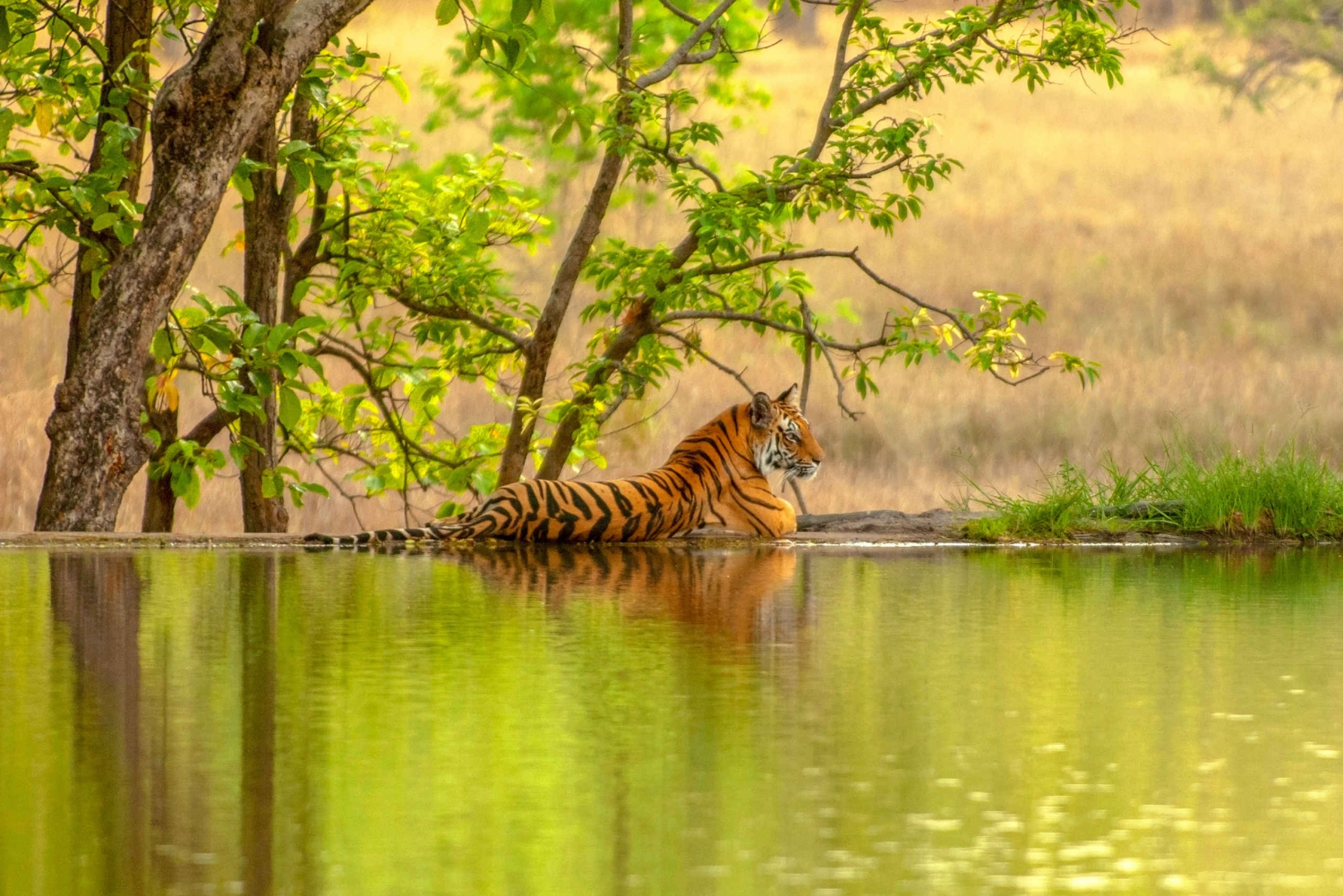 From Jaipur: Ranthambore Tiger Safari Private Day Trip