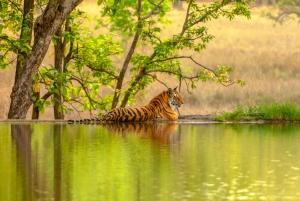 From Jaipur: Ranthambore Tiger Safari Private Day Trip