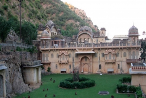 Jaipur: Full-Day City Tour with Camel Ride and Monkey Temple
