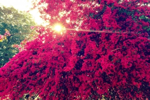 Jaipur: Pink City Photography Tour