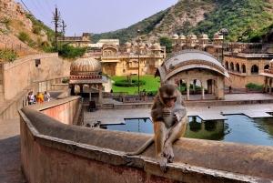 Jodhpur: Blue City Walking Tour
