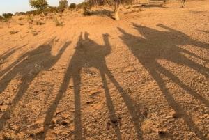 Jodhpur: Full-Day City Private Tour & Camel Safari