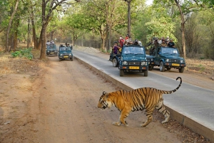 Ranthambore National Park: Jeep or Canter Safari Admission