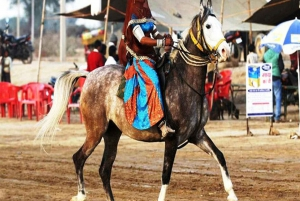 Udaipur: Evening Horse Riding Experience in the Countryside