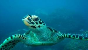Noronha Divers
