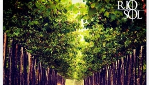 Santa Maria Vineyard
