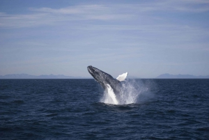 3-Hour Whale Watching Tour