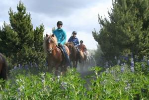 Afternoon Viking Horseback Tour