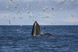 ATV & Whale Watching