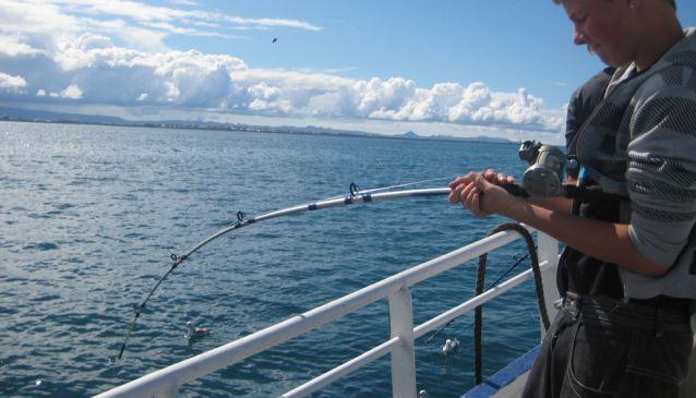 Elding Sea Angling